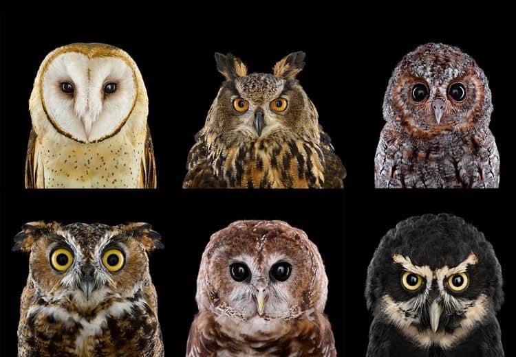 RT @HootyhooCL: ❤️❤️❤️ . . . . #Owls #owl https://t.co/yCfTGaTKuJ