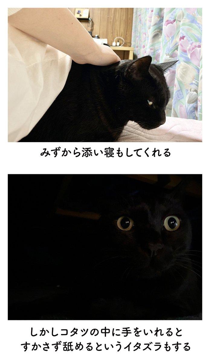 猫に大切にされると嬉しい!ほのぼの日常を描いた絵日記!