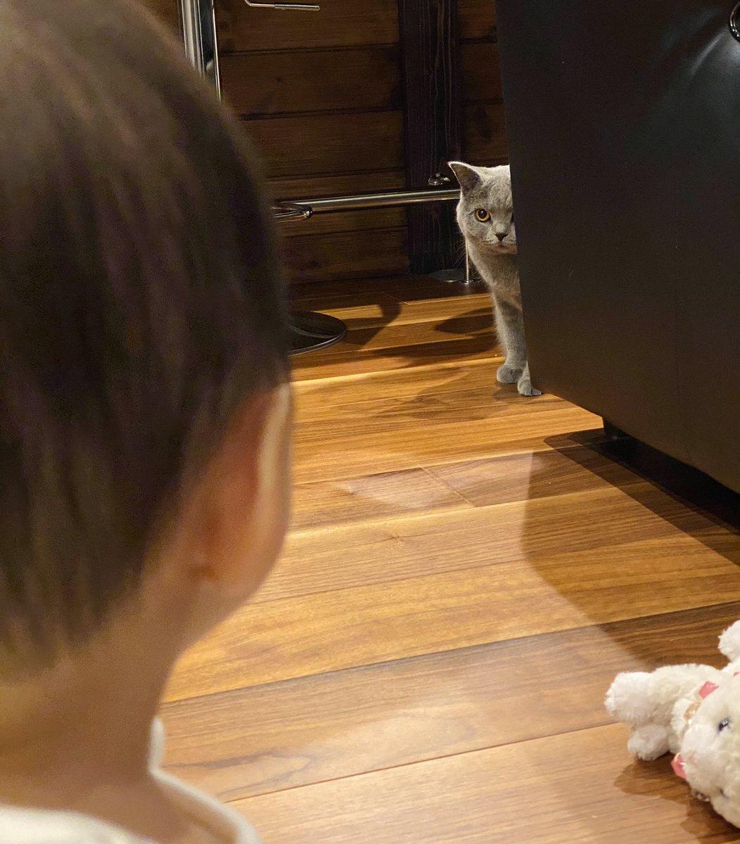 はじめて猫を見た娘と  はじめて娘を見た猫です