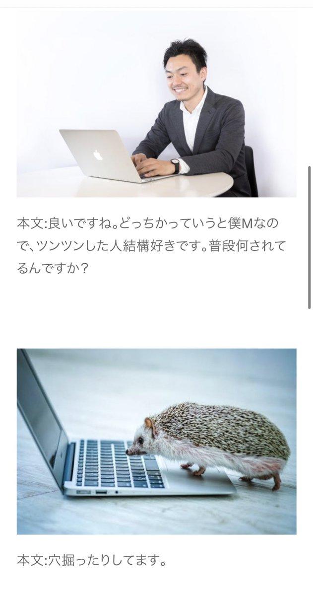 """リボルバーズ 丸谷 on Twitter: """"出会い系で運悪くハリネズミに当たっ ..."""
