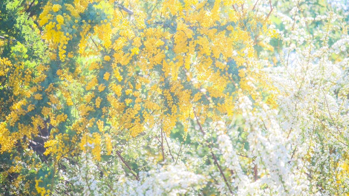 今日も、春は降り注ぐ…春の匂いがいっぱいの写真で元気をもらおう!