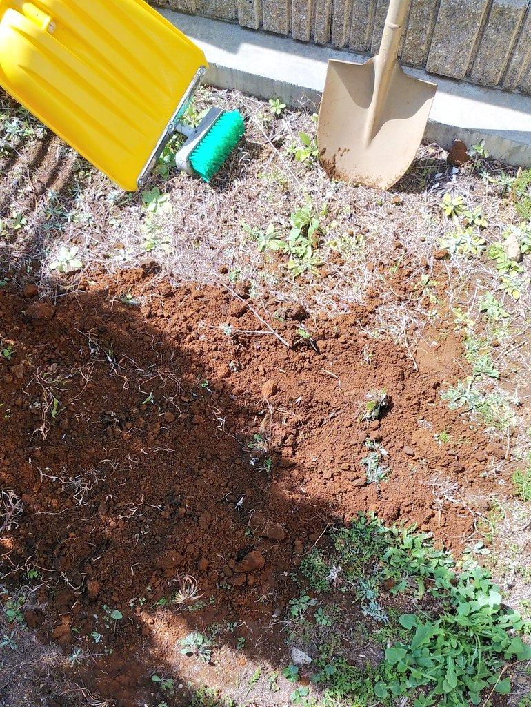 二度と思い出したくないので…卒業証書を庭に埋めてしまった…!