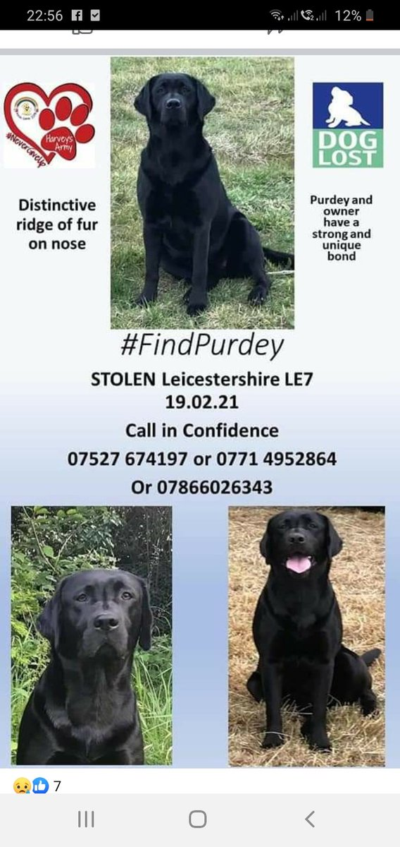 STOLEN DOG!  Please Retweet.  #FindPurdey #Leicestershire