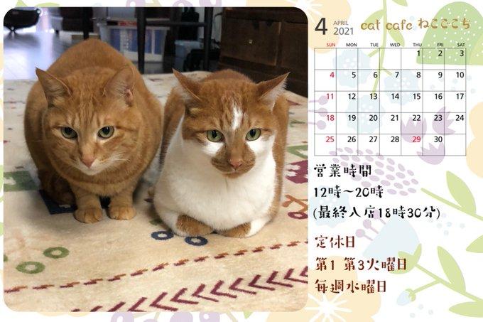 ねこごこち4月営業カレンダー