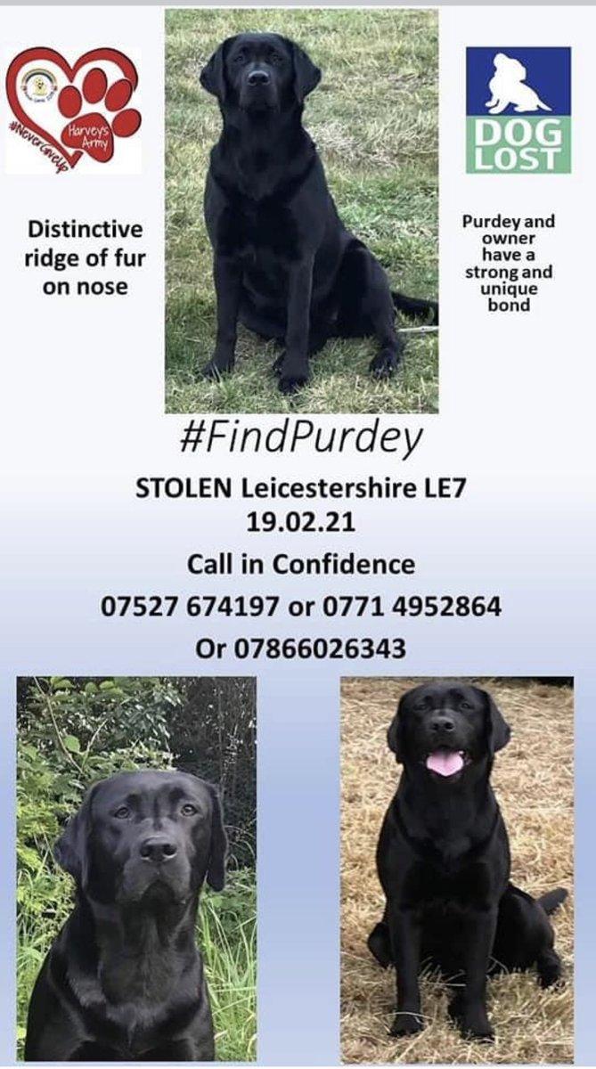 Have you seen her?  Distinctive ridge down her nose.   #findPurdey