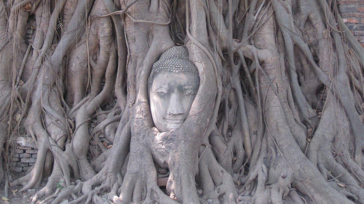 The ancient city of Ayutthaya brims with temples and makes a great day trip from Bangkok. It can be explored by foot or bicycle. #Ayutthaya #ThailandTravel #SouthEastAsiaTravel #BuddhistTemples #AncientCities https://t.co/W70bbGgewc