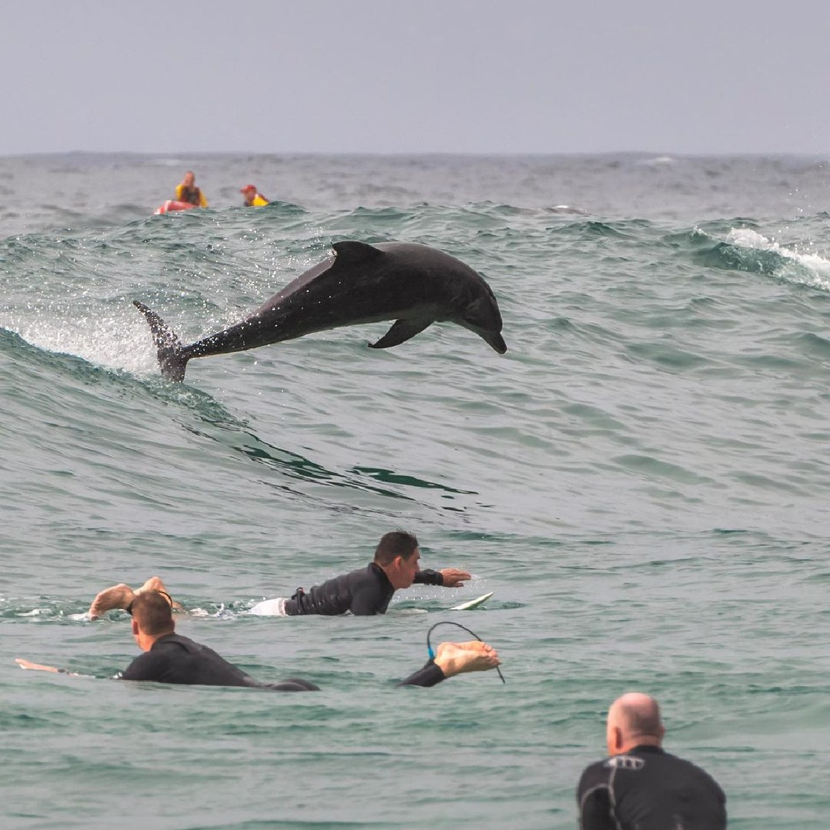 Make way please, pro surfer coming through!🐬   IG/rugligeri caught the incredible moment when this #dolphin decided to teach the surfers at Tamarama beach in @NewSouthWalesa thing or two 🏄♂️ 😂  #seeaustralia #LoveNSW #ilovesydney #holidayherethisyear https://t.co/BLRLTICGDT