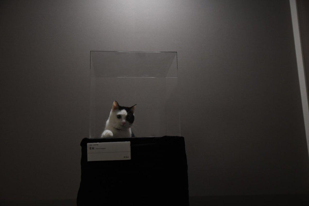 天才的発想!『置いておくだけで飼っている猫が美術品みたいになる』キャットタワーがアイデア満載!