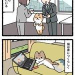 犬は人につき、猫は家につく。でもどっちでも幸せライフ!