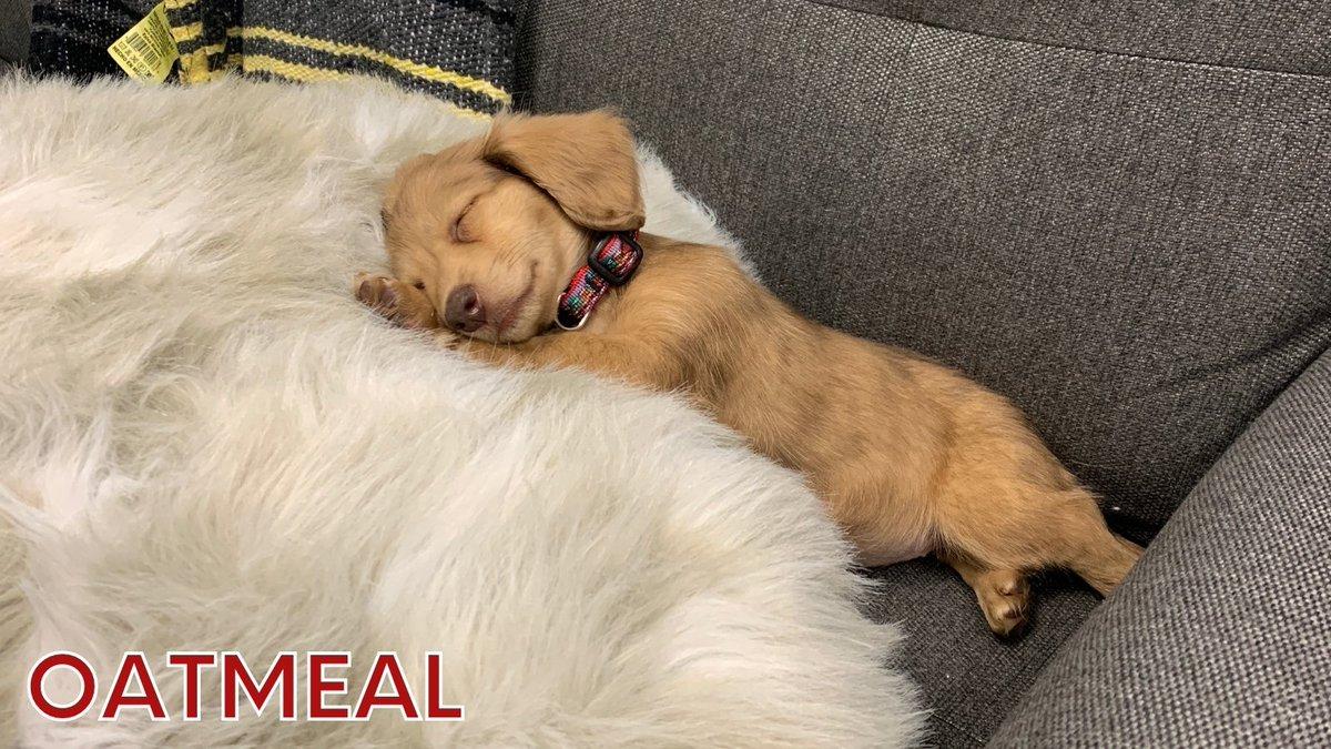 National Puppy Day 2021 Canada - 100 Social Media Holidays ...
