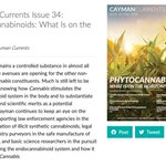 In the latest issue of Cayman Currents, @CaymanChemical explore the current and potential merits of cannabis constituents as a potential therapeutic.  Read the issue 👇  https://t.co/YgJF2WMTrp   #phytocannabinoids #sciencetwitter #medtwitter