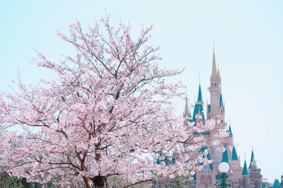 『さくら咲いたベリーフラペチーノ』がスターバックスから新登場!色あざやかで甘酸っぱいドリンクに春を感じます!
