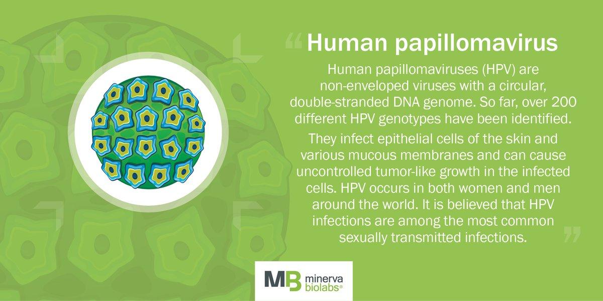 humán papillomavírus svenska