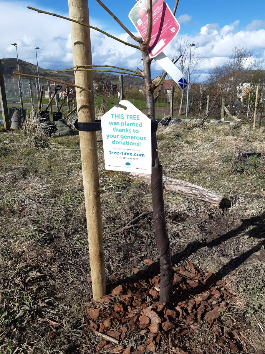 Delighted to be able to plant up new fruit trees in the grounds of @Castleview_PS  thanks to a donation from  @SoroptiTweet Edinburgh.