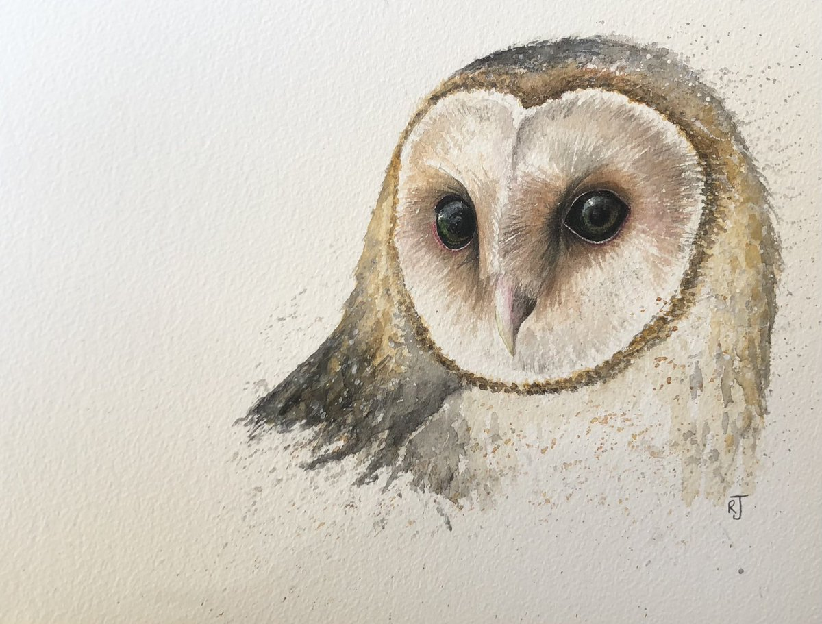 RT @HootyhooCL: Barn Owl ❤️ https://t.co/rdSpS6XwyD