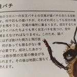 交尾以外仕事がない雄ミツバチは?交尾をすると生殖器が爆発して死ぬ!