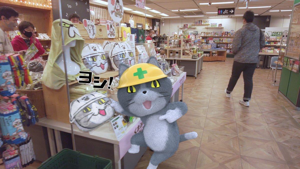 実写版・現場猫その4 くまみねグッズフェアを見つけた現場猫。 #東急ハンズ広島店 で5月10日まで!  #くまみね #zozi撮影 #現場猫