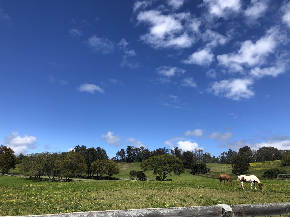 test Twitter Media - Beautiful day with mostly blue skies in Makawao. #CMWeather #Maui #Makawao #MagicalMaui #MauiNokaoi https://t.co/Jc6RhYd2je