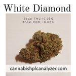White Diamond Strain Highest Measured Values Total THC 17.75% Total CBD <0.02% Total CBG 0.15%  #whitediamond #strain #cannabis #cannabisindustry #cannabiscommunity #mmemberville #hemp #hempoil #cbd #hplc #amsterdam #France #Netherlands