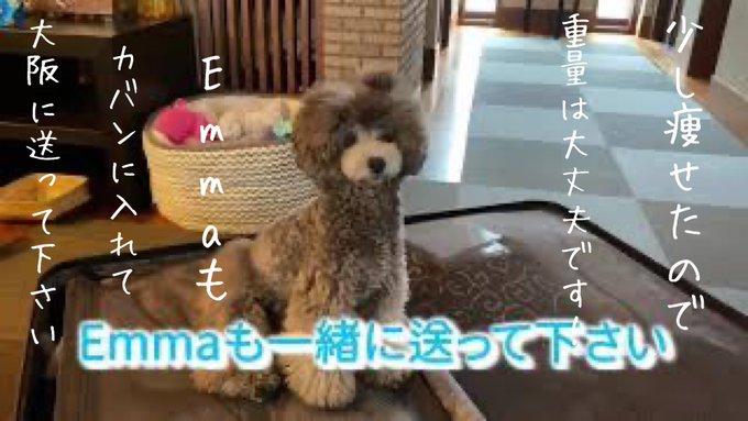 jumokuno0108の画像