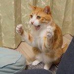 猫パンチの指導!やっぱ本物の指導は違うな~!