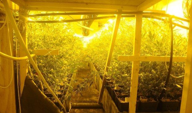 Politie ruimt hennepkwekerij met 400 planten in Stavenisse - ..