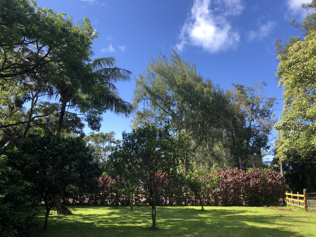 test Twitter Media - It's a beautiful day after morning rain in Haiku. #CMWeather #Maui #Haiku #MagicalMaui #BlueSkies #BeautifulDay #Mauinokaoi https://t.co/H0biaK03cf