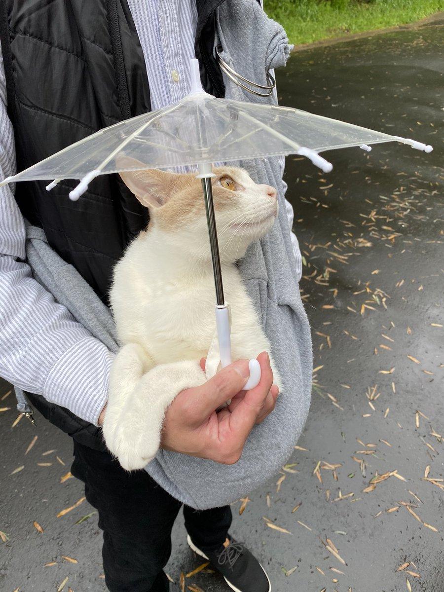 雨が降っても一緒に散歩に行ってくれる優しい飼い主さん!赤ちゃんみたいでかわいい