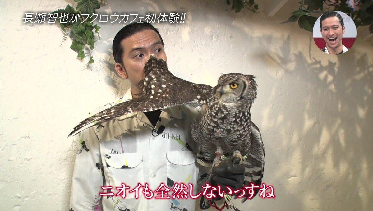 おしゃれイズムに登場した長瀬智也さんに注目!フクロウに好かれた姿が面白すぎる!