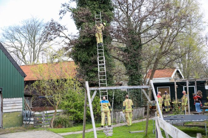 Kat in de boom houdt brandweer bezig https://t.co/2fOHx1Hiaj https://t.co/ZSJWlUWNz0