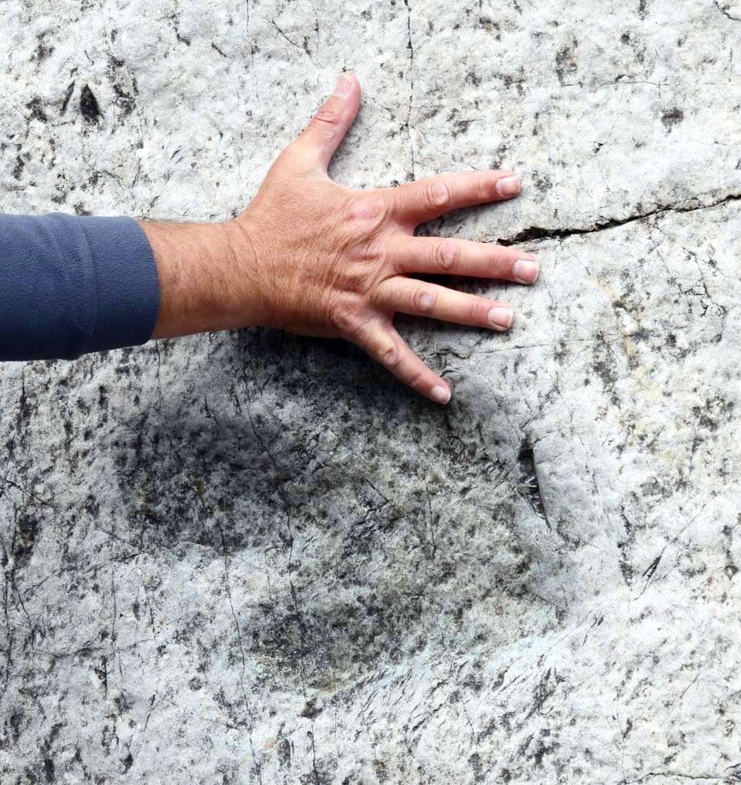 Le impronte fossili di dinosauro - Casavento - Cla...
