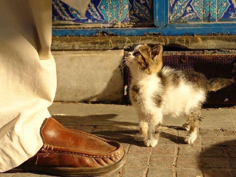 'إذا جاءك الحيوان يبحث عن طعام، فلا ترده.. فما أتاك إلا ليزيل عنك قليلاً من سيئاتك.' 💛
