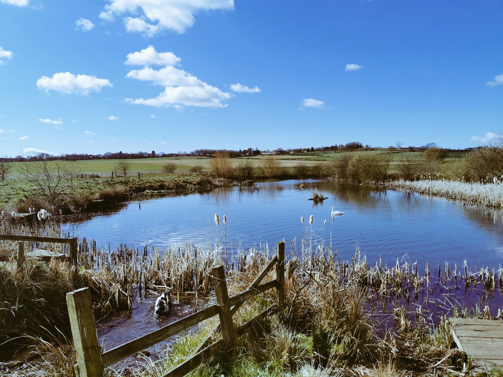 Nothing quite like the Yorkshire countryside.. Picture perfect.. #yorkshire #Swans https://t.co/OvxRvjjjoD