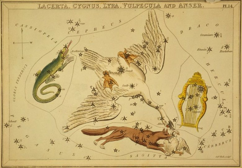 SPACEdotcom: What do birds have to do with stargazing? A lot, it turns out.