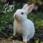 Image for the Tweet beginning: Happy Easter from Jen &