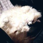 reika_tasoのサムネイル画像