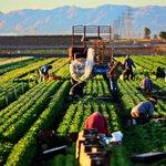 Image for the Tweet beginning: USMER Tarım Komisyonu, tarımsal üretim