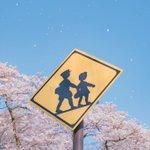 4月!小さな一歩を踏み出す季節!桜の花が美しい写真がいっぱい!