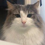 飼い主が呼ぶと目に輝きが戻る猫が面白い!それよりも「そっくり猫」が多すぎる…?!
