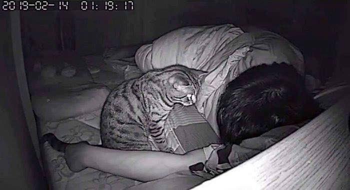 顔面がお気に入りな猫!夜中に息ができなくなったわけとは
