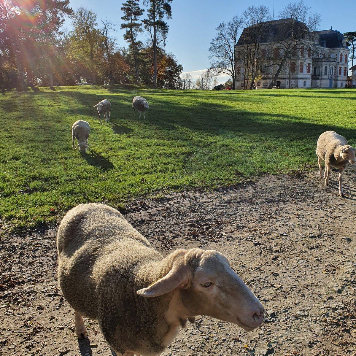 Défi relevé pour le challenge #monpatrimoineamoinsde10kms ! À #Lormont il est possible de profiter d'une balade au grand air au sein du parc du Château des Iris (et en très bonne compagnie) ! #nature #confinement #balade #gironde #rivedroite #animaux #promenade #patrimoine https://t.co/1PdYueNngN