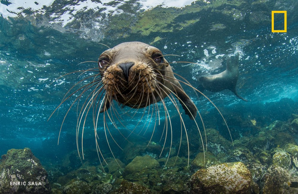 """In addition to Community Solutions, National Geographic's Pristine Seas was among six projects named as finalists in the competition.   """"This competition really pushed us to think bigger,"""" says Explorer-in-Residence and Pristine Seas founder  @Enric_Sala https://t.co/Tp1wGuqrb9"""