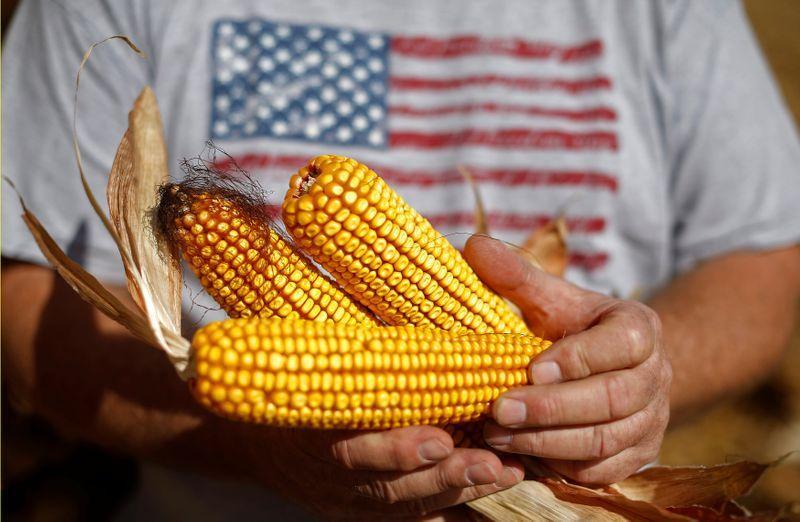 Column: U.S. corn exporters rack up monstrous volumes on their way to record books -Braun https://t.co/FNMXfxMtDi https://t.co/cw6t7xA0Dx