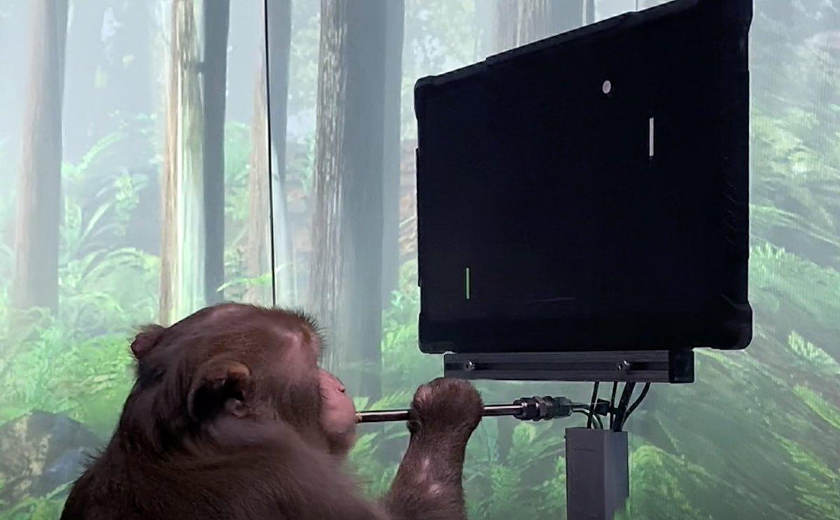 Monkey MindPong https://t.co/7zstTZ1X1w https://t.co/GYrYNsJ68u