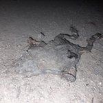 Image for the Tweet beginning: Granotes, gripaus, tritons i salamandres