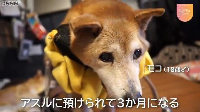 介護 ホーム アスル 老 犬 犬の介護に疲れ、辛い人へ。少しでも介護が楽になる改善策