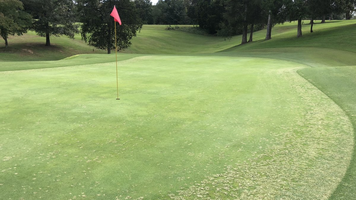 Goosegrass can be a challenging weed to control, and this research shows that various environmental conditions can have a big impact on the efficacy of postemergence herbicides.👉https://bit.ly/3rRBt1e #TNturf
