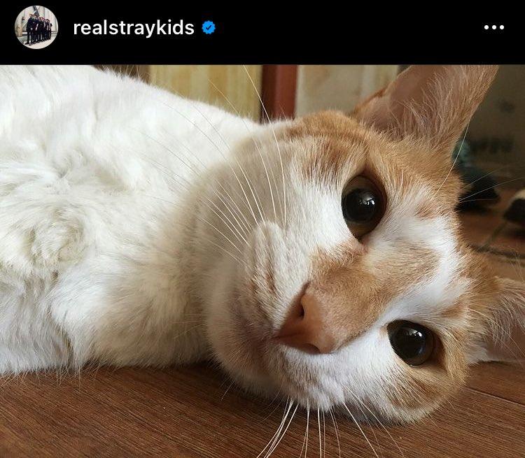 Stay, do you have pets?? I think that our pets should participate in the next #StaySelcaDay Stay tienen mascotas? Opino que deberíamos incluir a nuestras mascotas en el siguiente Stay Selca Day