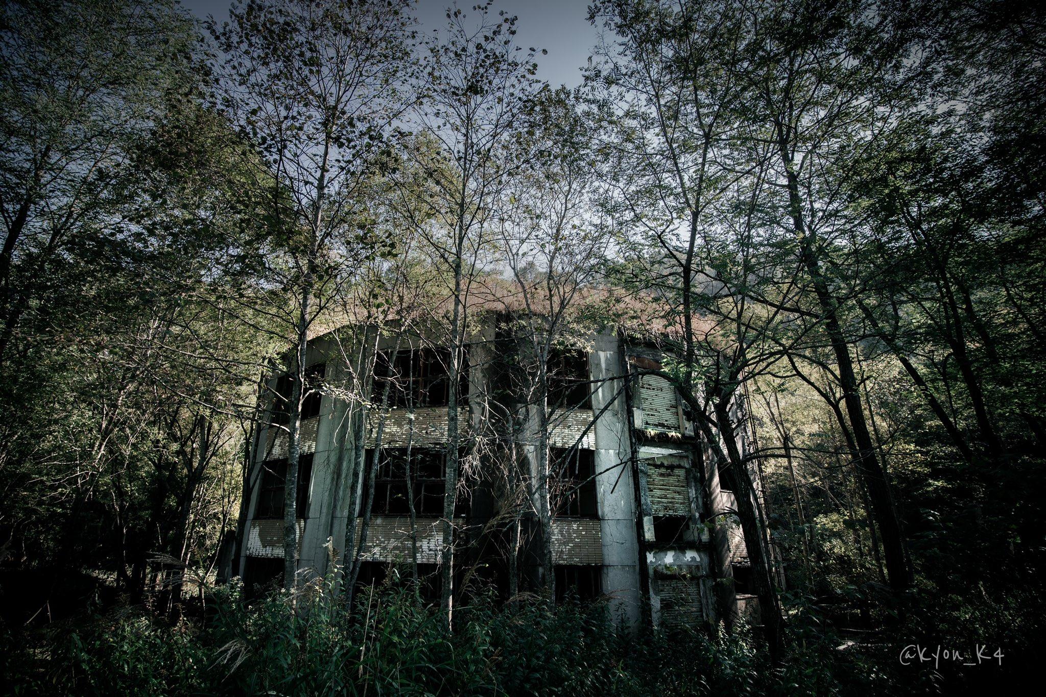 小學「荒廢50年」被大自然佔領!他拍下「教室被森林吞噬」網驚:是天空之城
