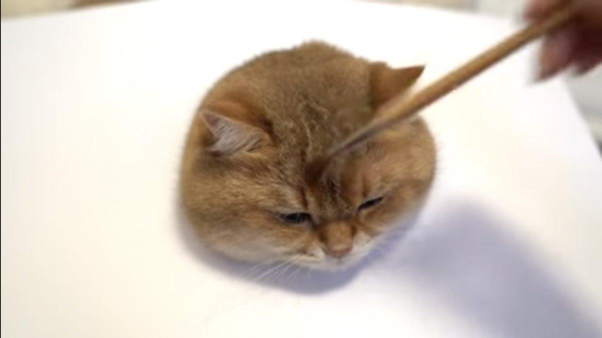 「猫の描き方講座」という動画!まるで生きているかのようにリアル!